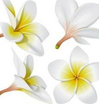 Kwiat gardenii