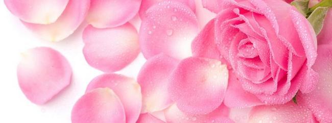 Płatki róży pokryte rosą
